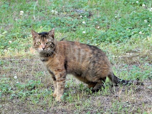 キジトラ猫のネコロン (3)