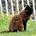 Photos: サビ猫おこげ (1)