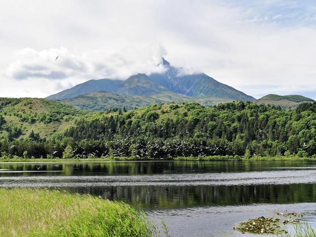 利尻富士とオタトマリ沼