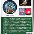 Photos: 01北海道天塩町のマンホールカード (2)