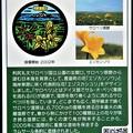 Photos: 01北海道豊富町のマンホールカード (2)