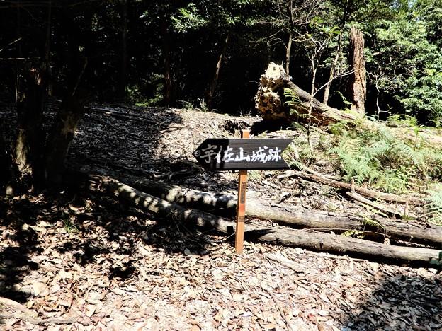 宇佐山城跡への道 (1)