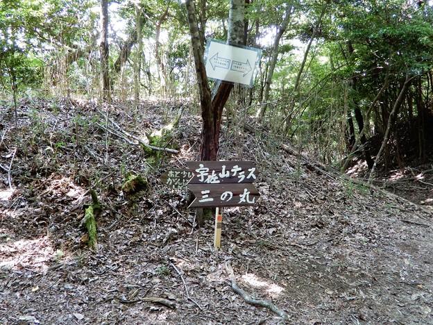 宇佐山城跡への道 (8)