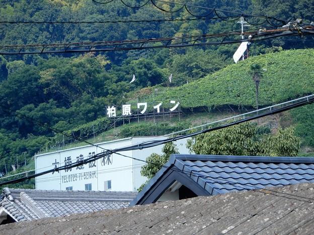 Photos: 石神社境内から遠望する柏原ワインとブドウ畑