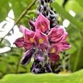 クズの花 (2)
