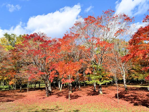 福原山荘 紅葉の絨毯