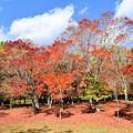 Photos: 福原山荘 紅葉の絨毯