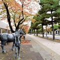 Photos: 十和田官庁街の紅葉