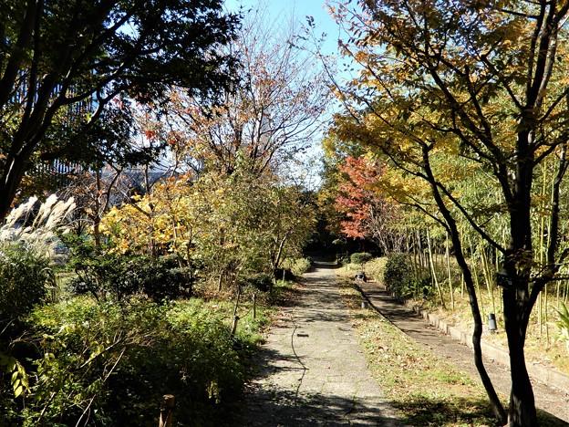 梅田の里山 (2)東側からの眺め