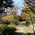 Photos: 梅田の里山 (2)東側からの眺め