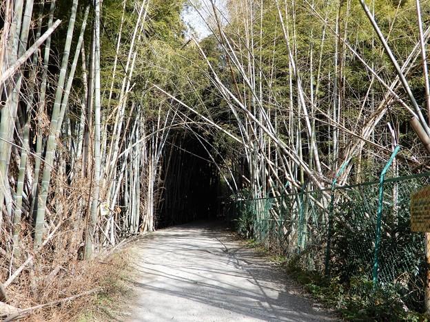 大岩山展望所への道 (1)