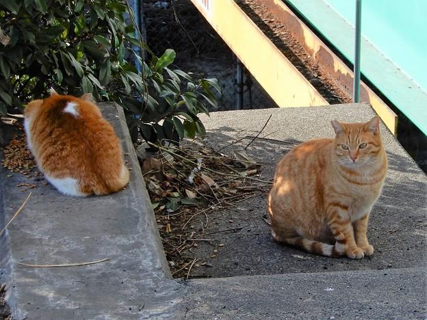 恩智川べり(中央大通り付近)の猫 (1)