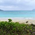 イダの浜(西表島・船浮イダの浜)