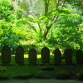 報国寺 石仏