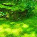 写真: 夏の天授庵 南庭