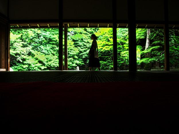 写真: 夏の蓮華寺