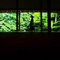 Photos: 夏の蓮華寺
