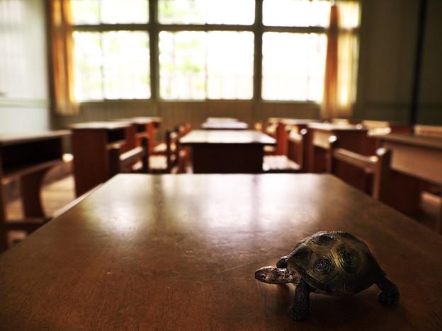 亀、授業中