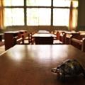 Photos: 亀、授業中