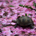 桜散亀歩特盛
