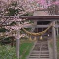 Photos: 古社
