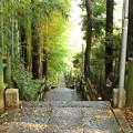 月讀神社 竹林の参道