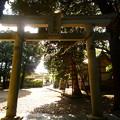 月讀神社拝殿の東に位置する月讀神社鳥居の一つ