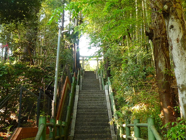 写真: 月読神社 竹林の参道
