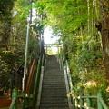 写真: 月読神社 美しい竹林の参道