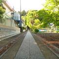 写真: 月讀神社 新緑が美しい表参道