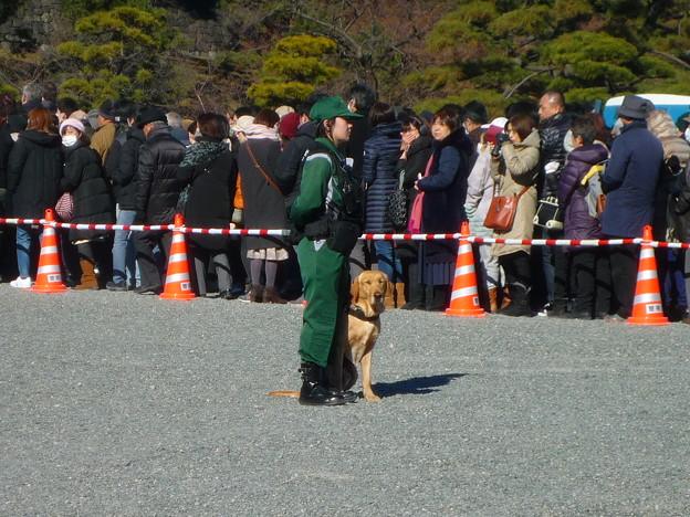 警視庁の警備犬ラブラドール
