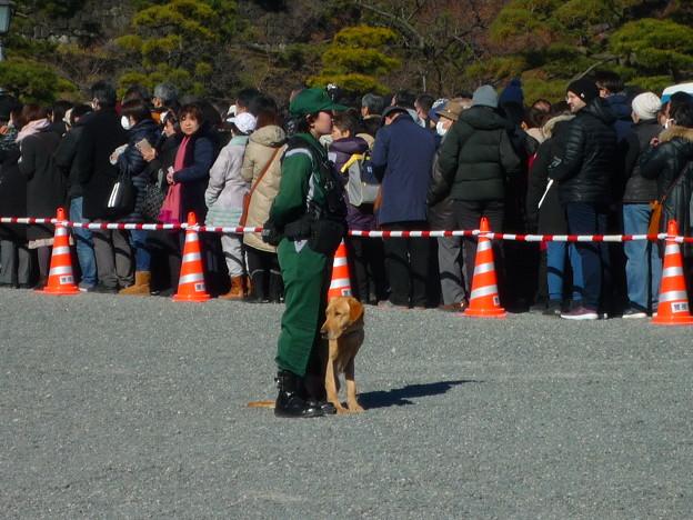 警視庁のラブラドール警備犬