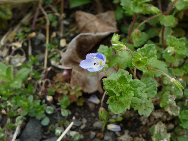 身近な春の花