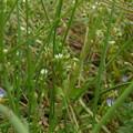 Photos: 春の草むら