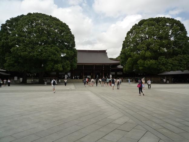 明治神宮拝殿とご神木の楠