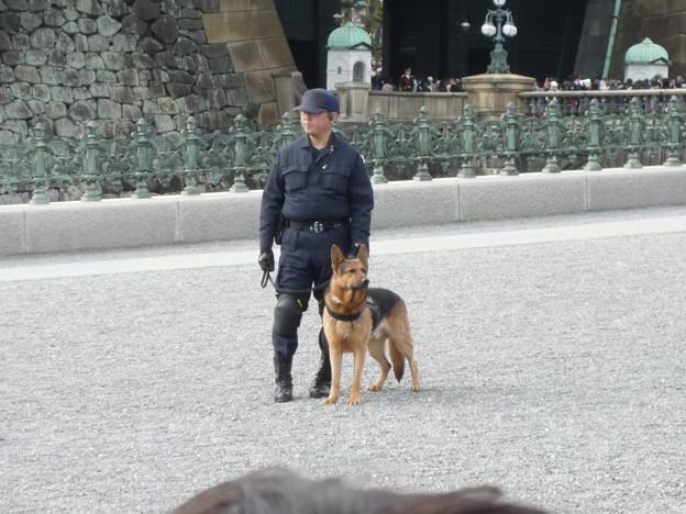いけめんな警察犬