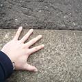 Photos: 私の手と、とても精密に組み合わされている桜田門石垣