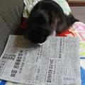 Photos: 憲法改正・・・?!