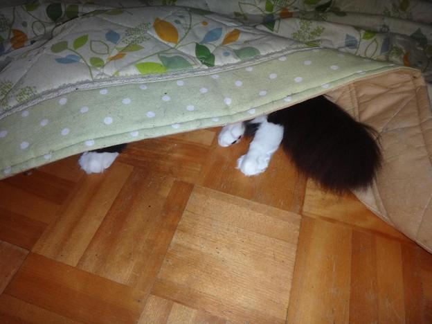 Photos: 頭隠してシッポ隠さず!