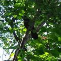 写真: 近くにカラスの巣が!