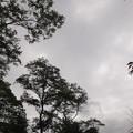 Photos: 雲り空で気温も低い