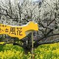 写真: 犬寄峠の黄色い丘