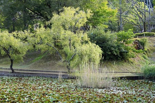 初秋の宇和公園