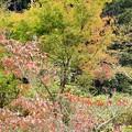 写真: カルスト高原の紅葉