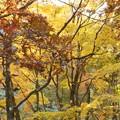写真: 滑床渓谷の紅葉