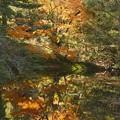 写真: 水鏡の紅葉