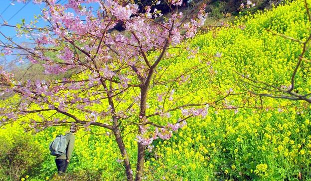 Photos: 2019/春の訪れ