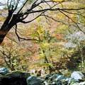 紅葉/小田深山渓谷