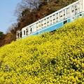 Photos: 春一番が・・・・