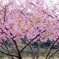 Photos: 桜咲く・春の訪れ